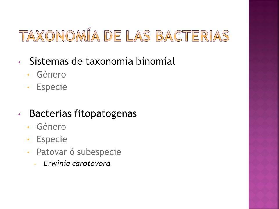 Taxonomía de las bacterias