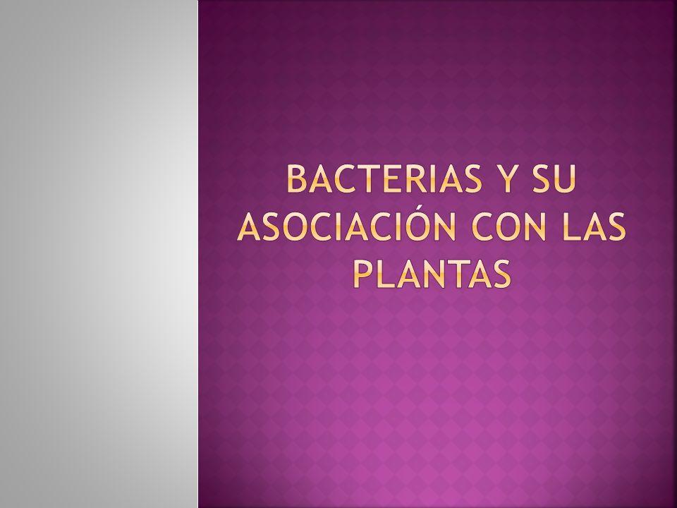 Bacterias y su asociación con las plantas