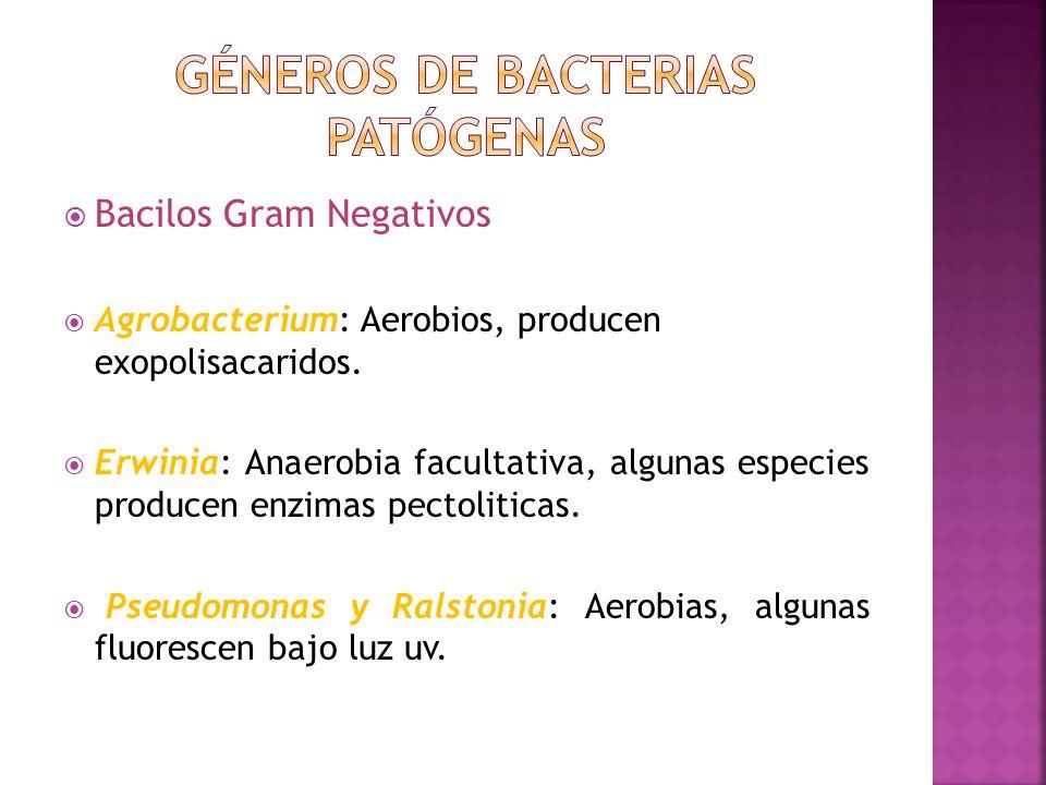 Géneros de bacterias patógenas