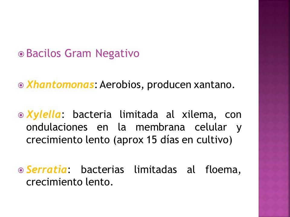 Bacilos Gram Negativo Xhantomonas: Aerobios, producen xantano.