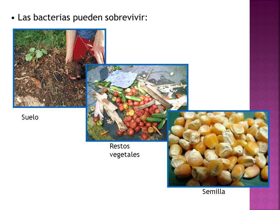 Las bacterias pueden sobrevivir:
