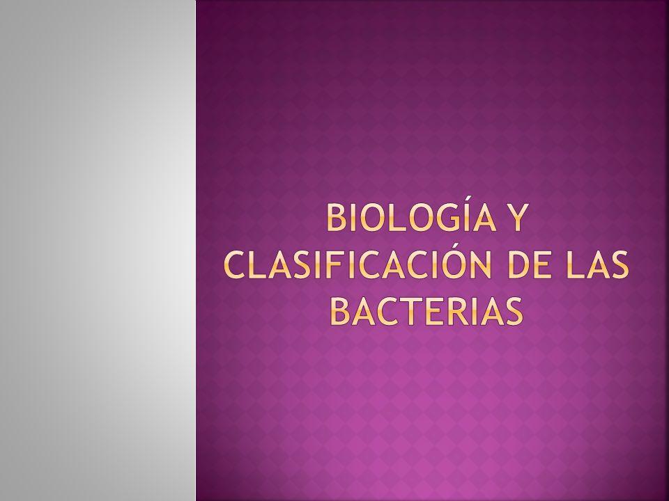 Biología y clasificación de las bacterias