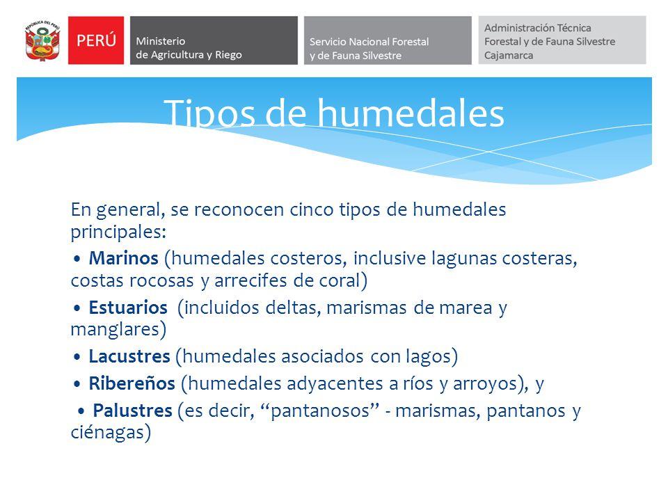 Tipos de humedales En general, se reconocen cinco tipos de humedales principales: