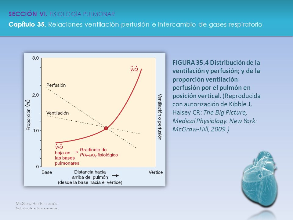 Medical Physiology. New York: McGraw-Hill, 2009.)
