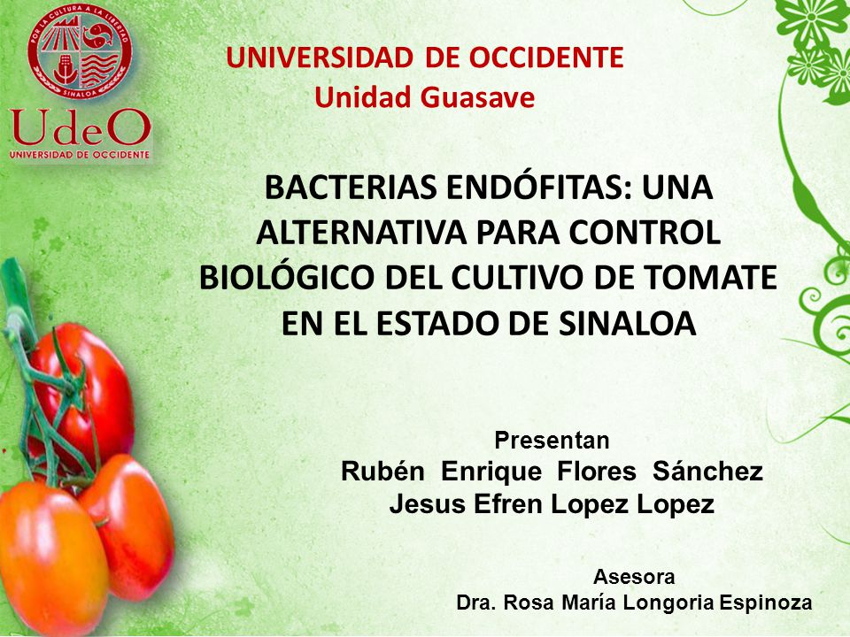 UNIVERSIDAD DE OCCIDENTE Unidad Guasave