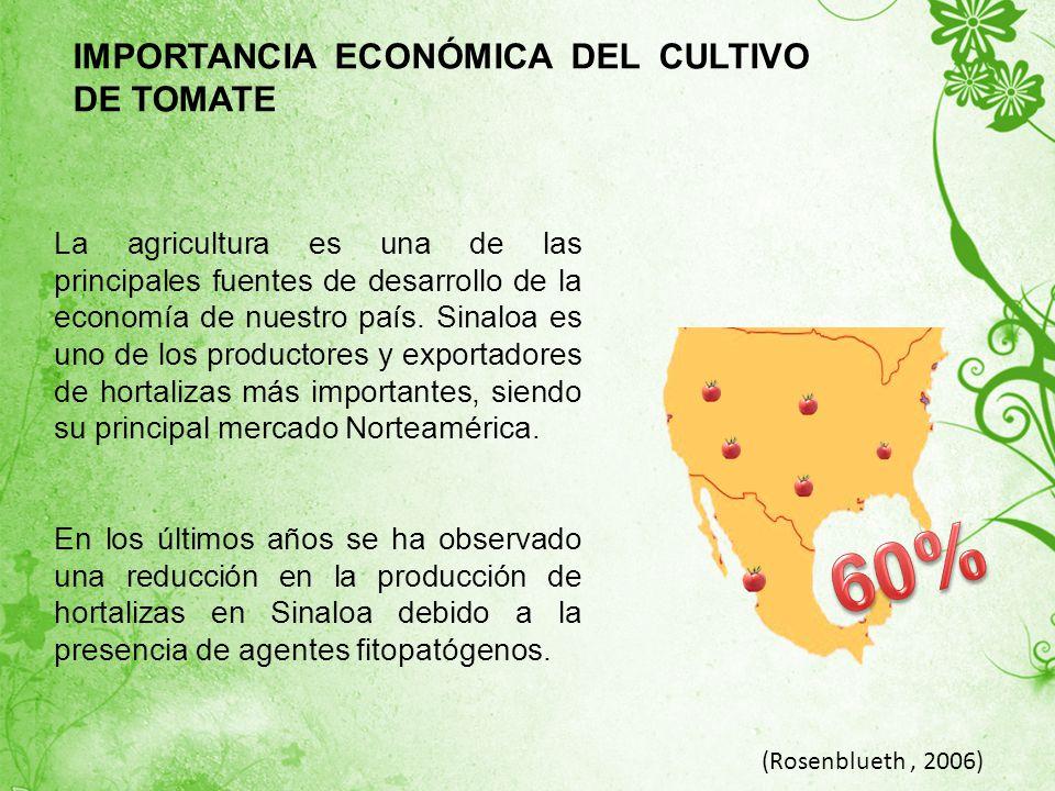 60% IMPORTANCIA ECONÓMICA DEL CULTIVO DE TOMATE