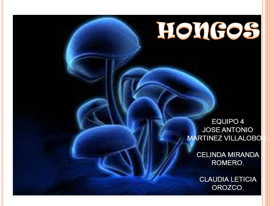 HONGOS EQUIPO 4 JOSE ANTONIO MARTINEZ VILLALOBOS.