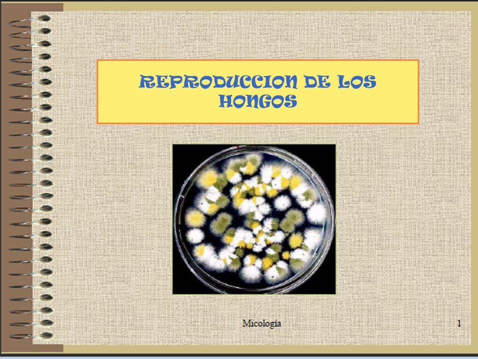 REPRODUCCION DE LOS HONGOS