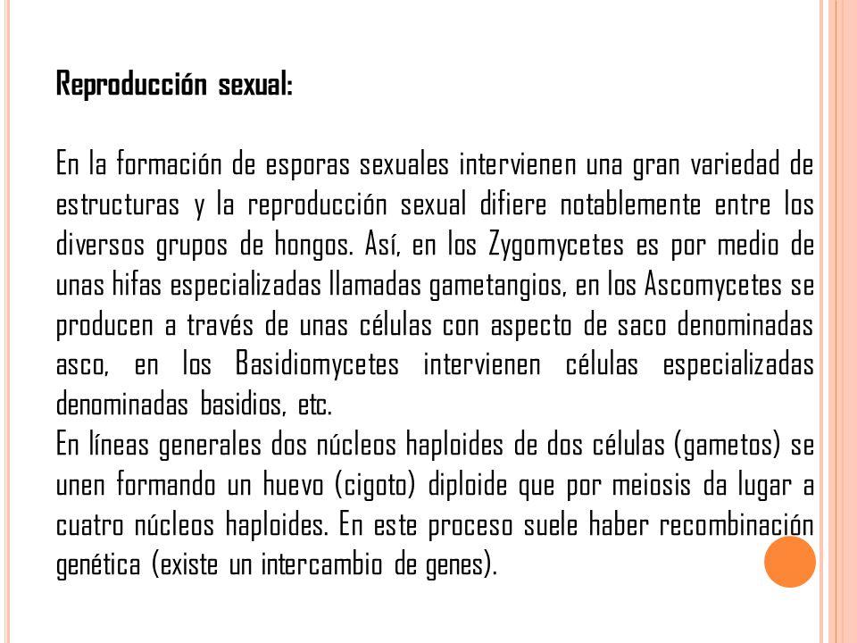 Reproducción sexual: