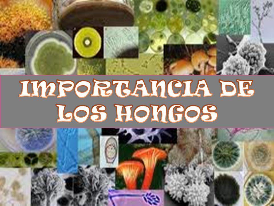 IMPORTANCIA DE LOS HONGOS
