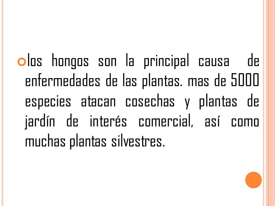 los hongos son la principal causa de enfermedades de las plantas