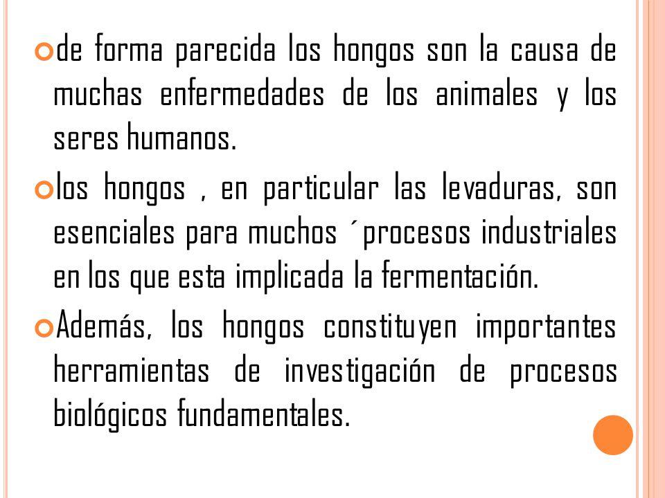 de forma parecida los hongos son la causa de muchas enfermedades de los animales y los seres humanos.