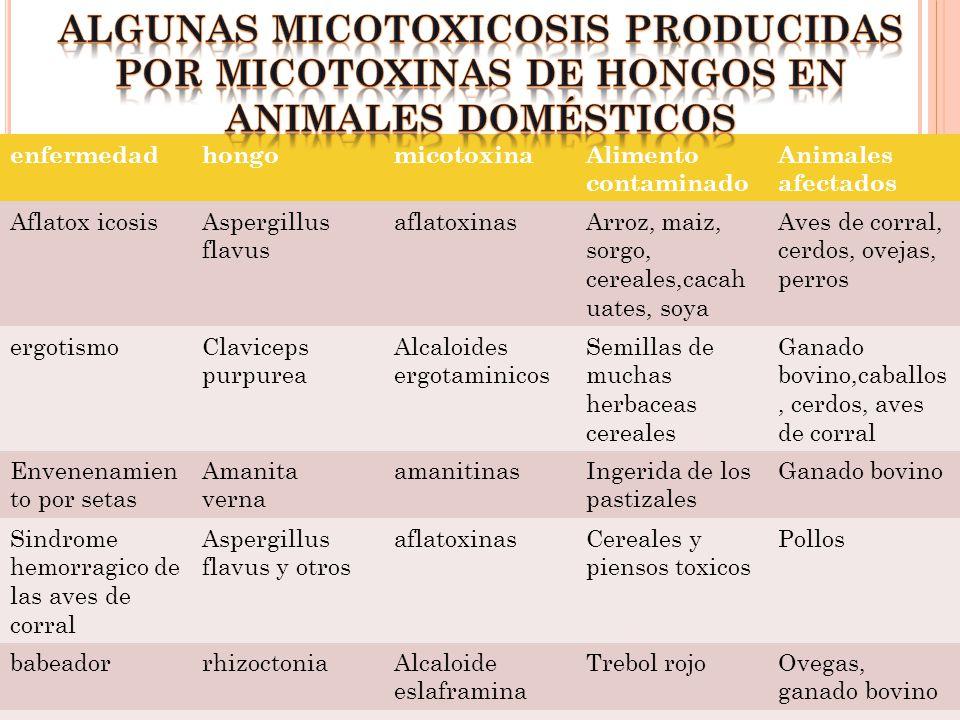 algunas micotoxicosis producidas por micotoxinas de hongos en animales domésticos