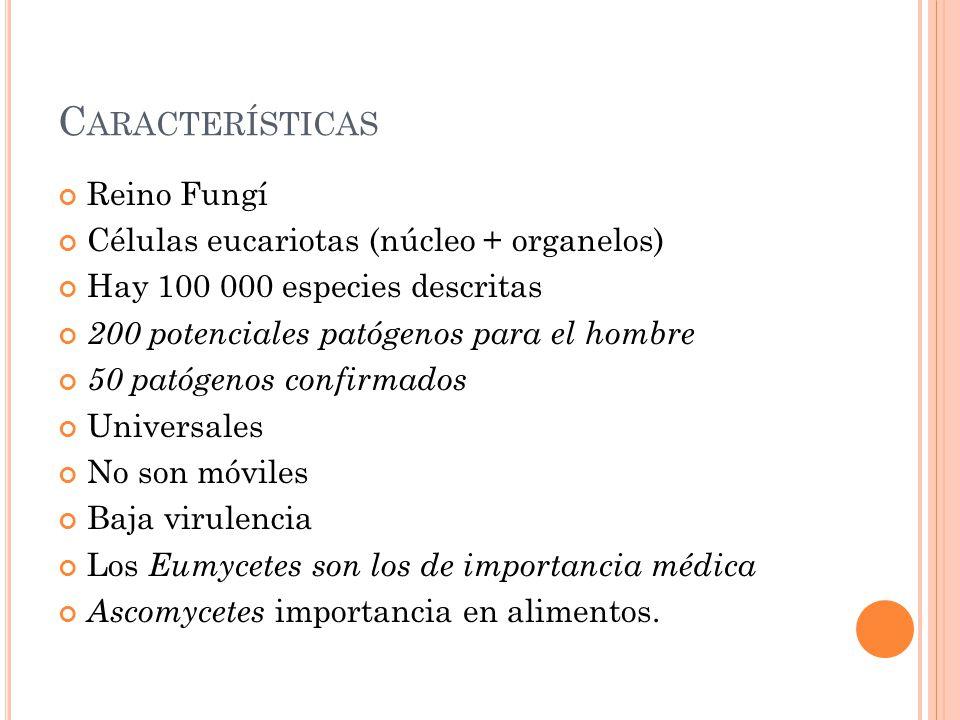 Características Reino Fungí Células eucariotas (núcleo + organelos)