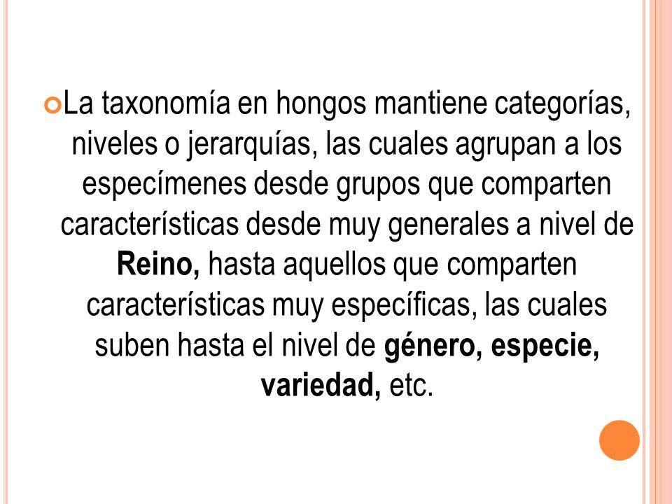 La taxonomía en hongos mantiene categorías, niveles o jerarquías, las cuales agrupan a los especímenes desde grupos que comparten características desde muy generales a nivel de Reino, hasta aquellos que comparten características muy específicas, las cuales suben hasta el nivel de género, especie, variedad, etc.