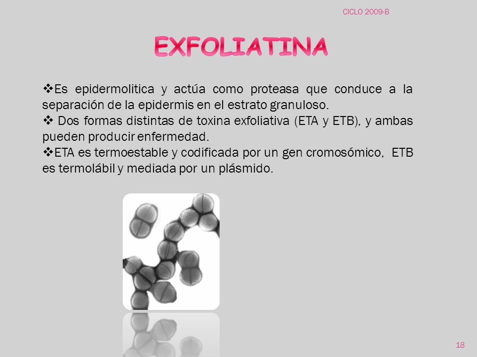 CICLO 2009-B EXFOLIATINA. Es epidermolitica y actúa como proteasa que conduce a la separación de la epidermis en el estrato granuloso.