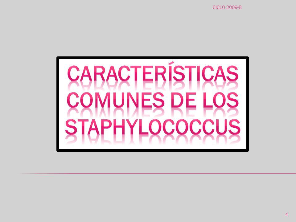 Características comunes de los Staphylococcus