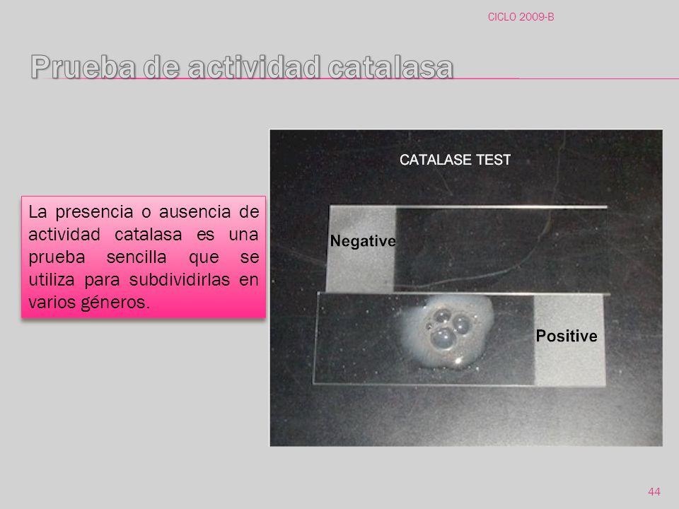 Prueba de actividad catalasa