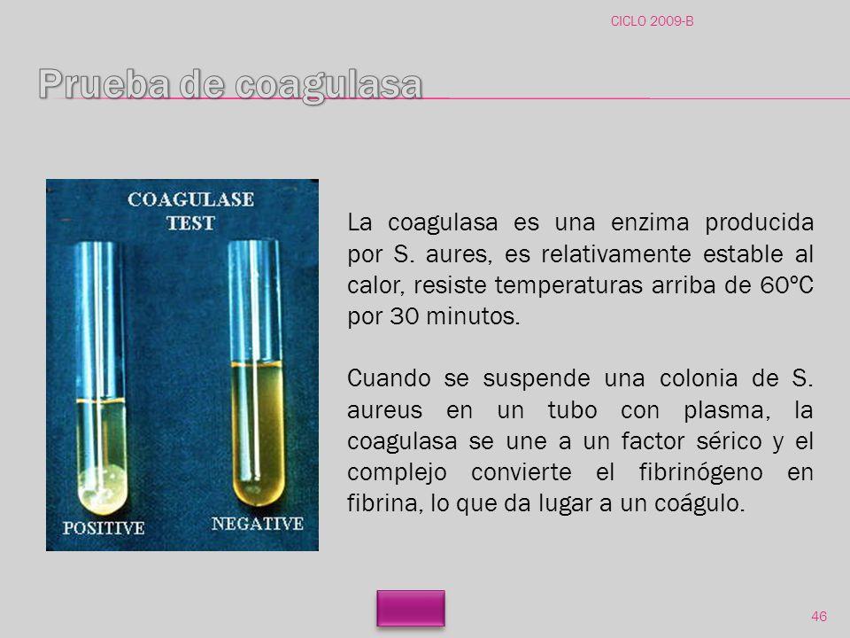 CICLO 2009-B Prueba de coagulasa.