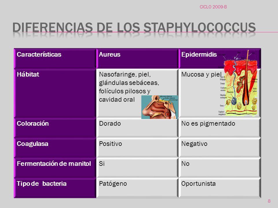 Diferencias de los staphylococcus