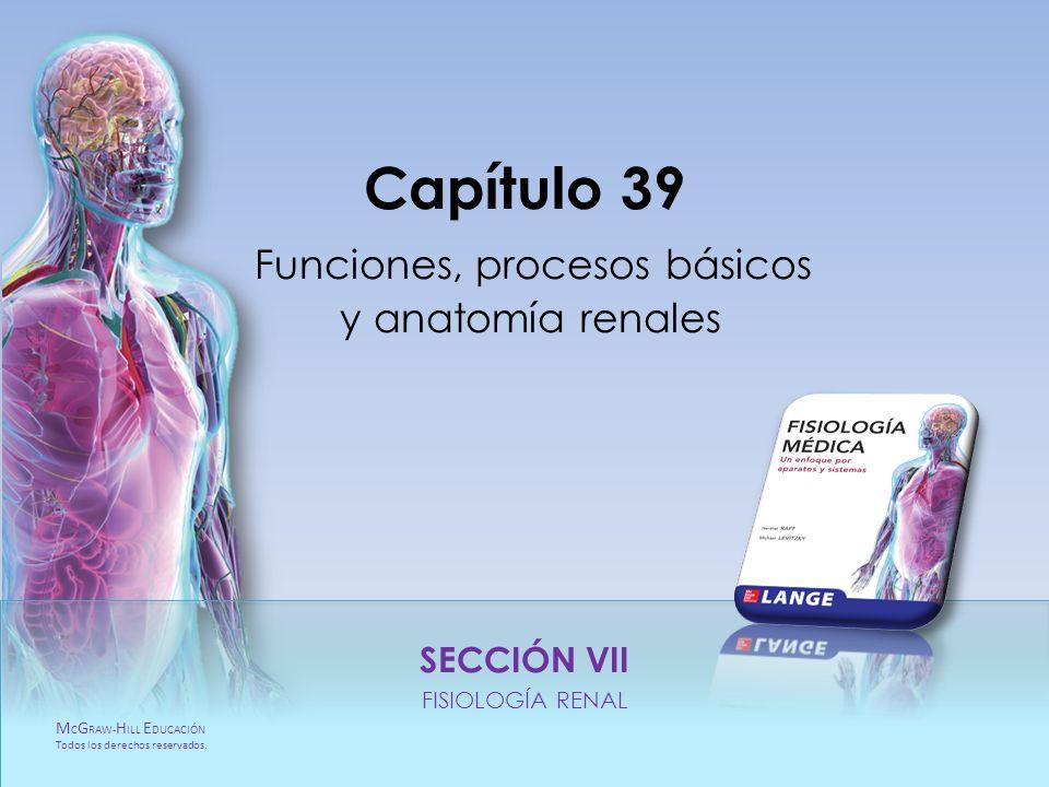 Capítulo 39 Funciones, procesos básicos y anatomía renales