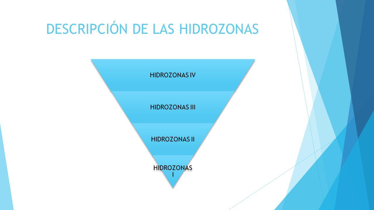 DESCRIPCIÓN DE LAS HIDROZONAS