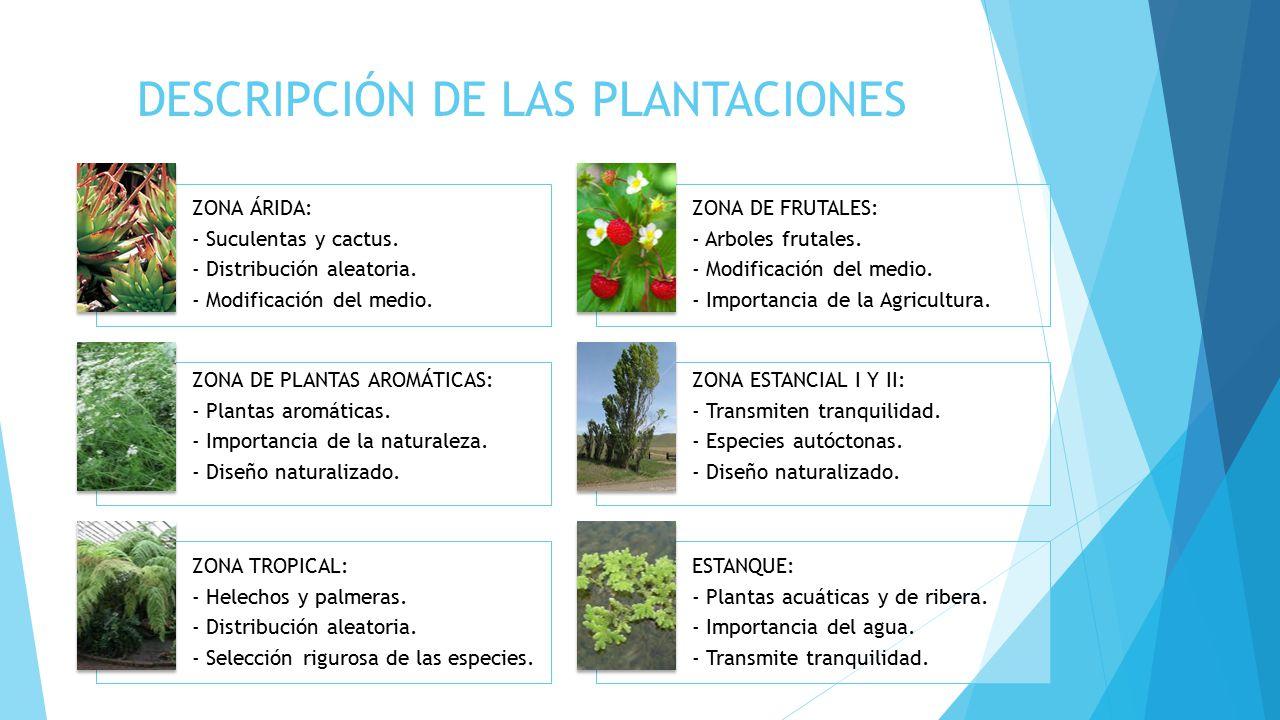 DESCRIPCIÓN DE LAS PLANTACIONES