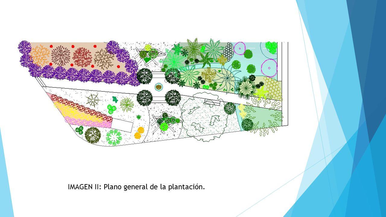 IMAGEN II: Plano general de la plantación.
