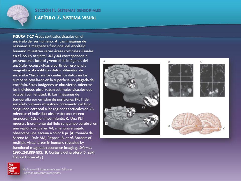 FIGURA 7-17 Áreas corticales visuales en el encéfalo del ser humano. A