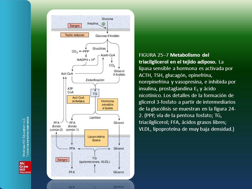 FIGURA 25–7 Metabolismo del triacilglicerol en el tejido adiposo