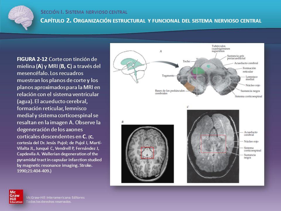 FIGURA 2-12 Corte con tinción de mielina (A) y MRI (B, C) a través del mesencéfalo.