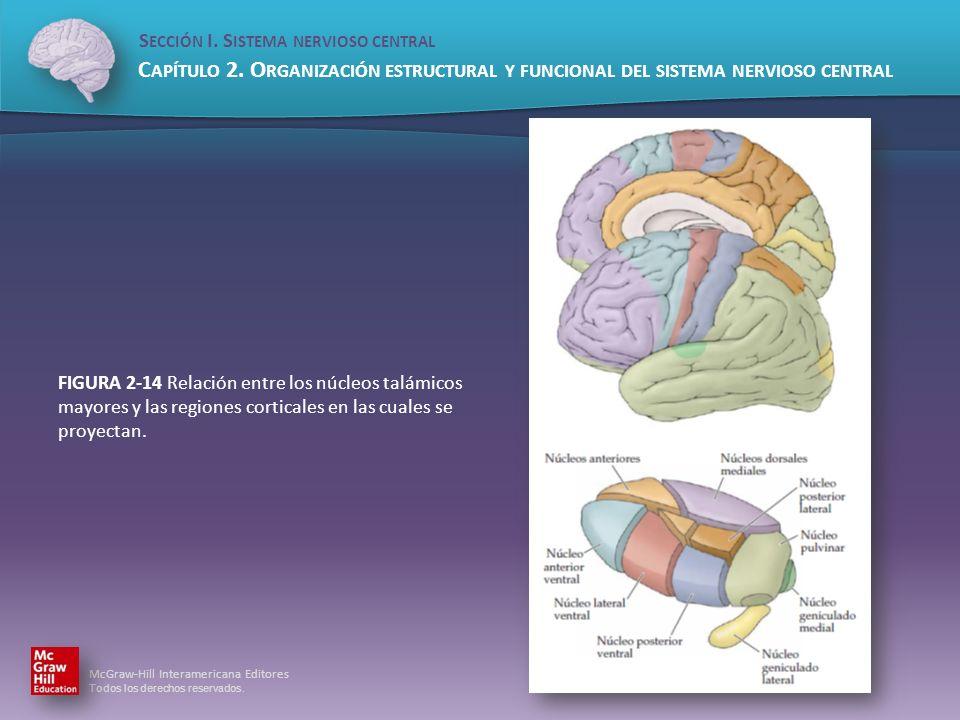 FIGURA 2-14 Relación entre los núcleos talámicos mayores y las regiones corticales en las cuales se proyectan.