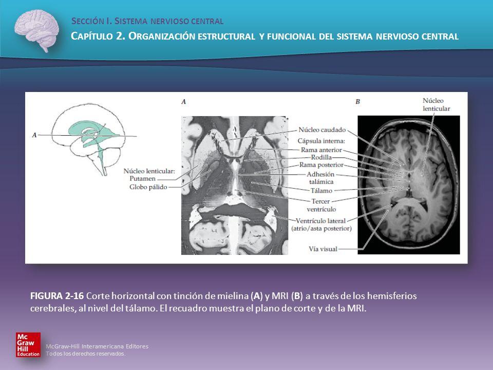 FIGURA 2-16 Corte horizontal con tinción de mielina (A) y MRI (B) a través de los hemisferios cerebrales, al nivel del tálamo.