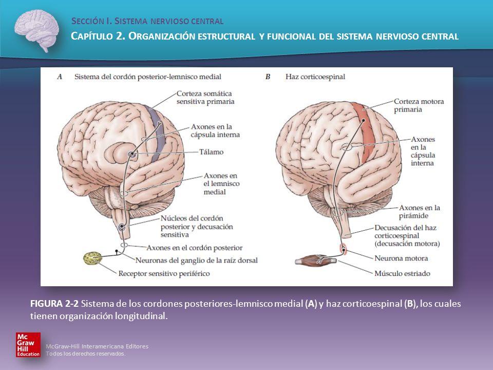 FIGURA 2-2 Sistema de los cordones posteriores-lemnisco medial (A) y haz corticoespinal (B), los cuales tienen organización longitudinal.