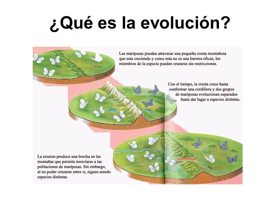 ¿Qué es la evolución