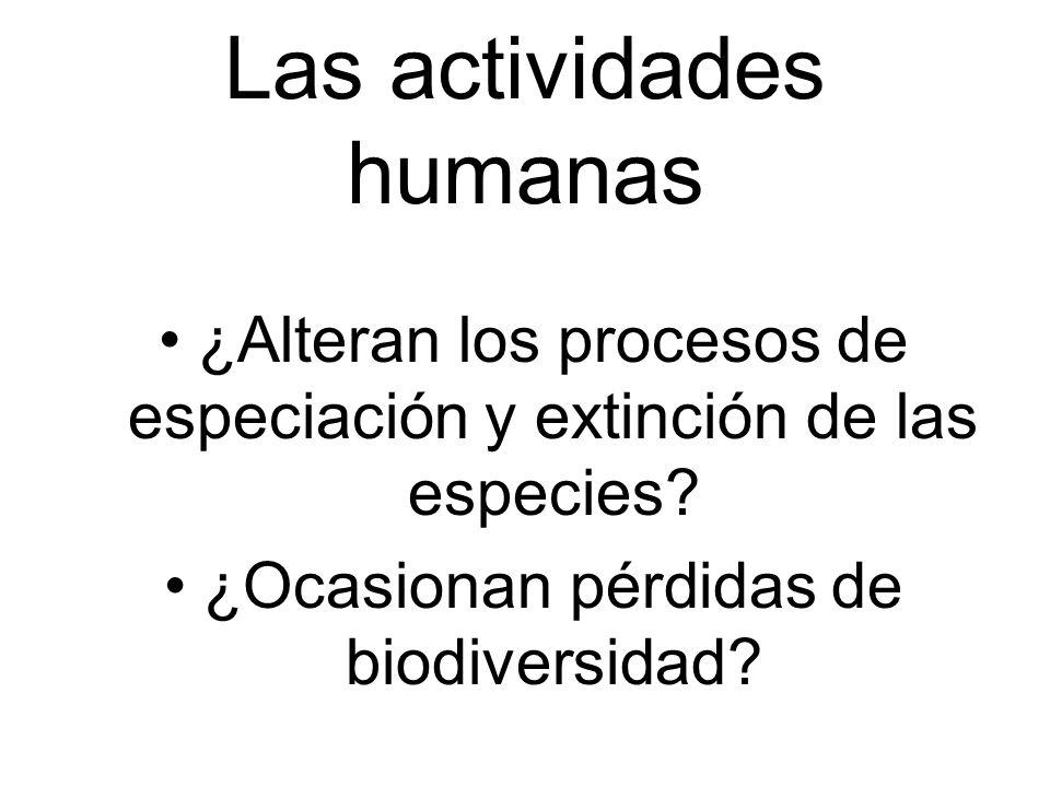 Las actividades humanas