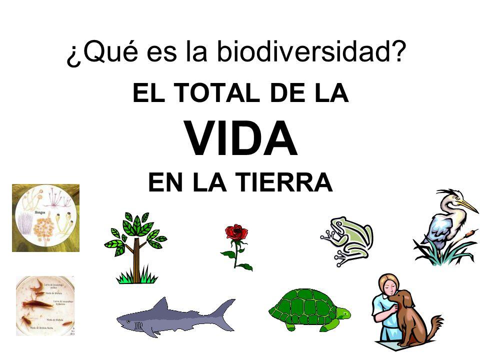 ¿Qué es la biodiversidad