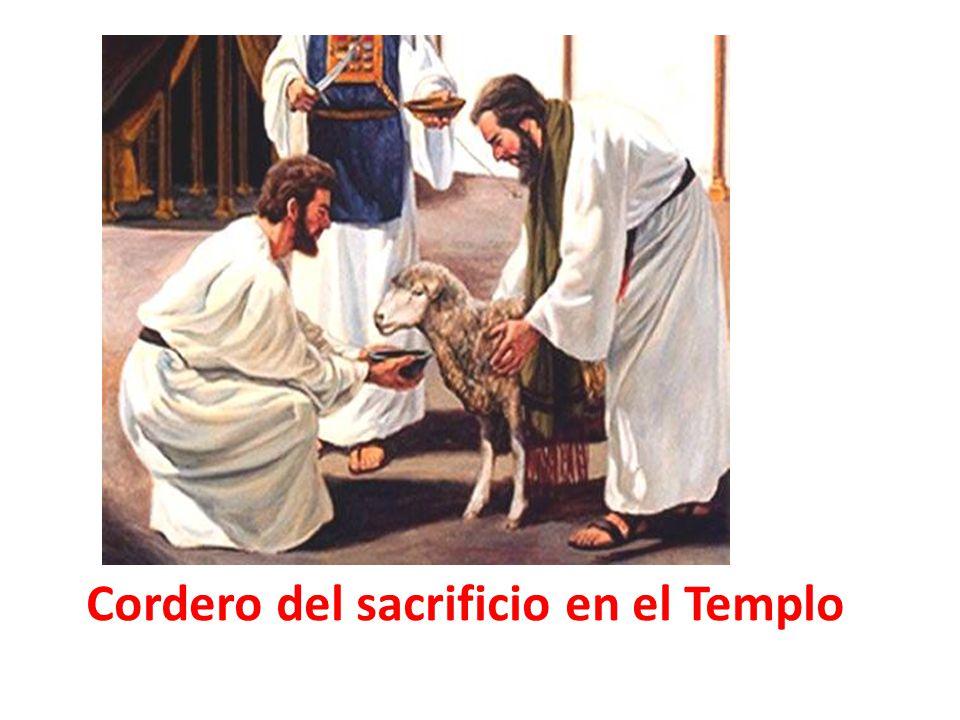 Cordero del sacrificio en el Templo