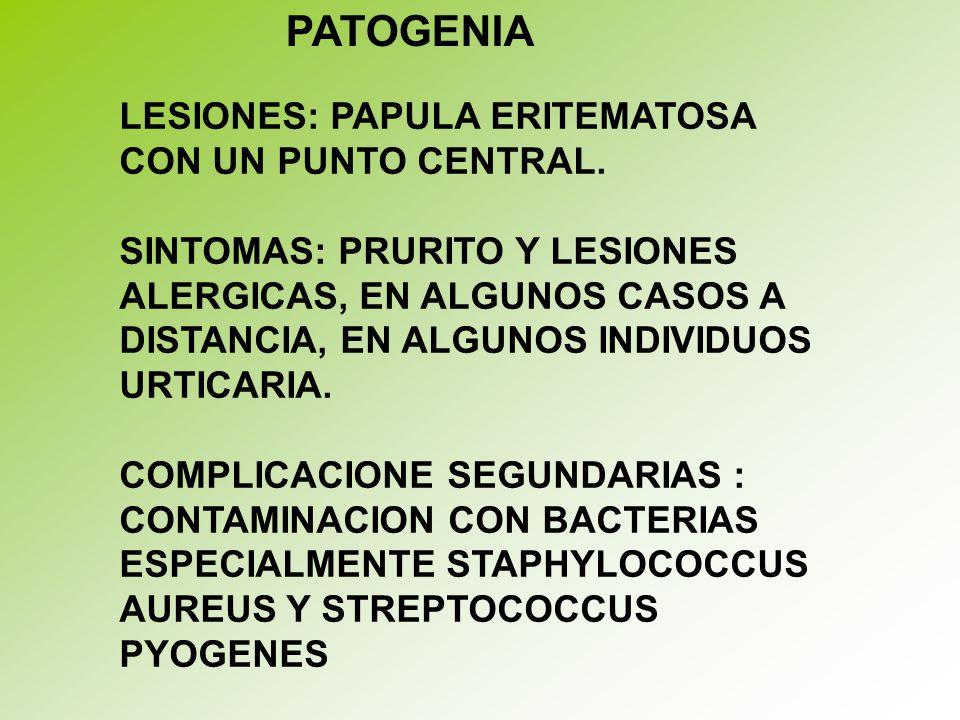 PATOGENIA LESIONES: PAPULA ERITEMATOSA CON UN PUNTO CENTRAL.
