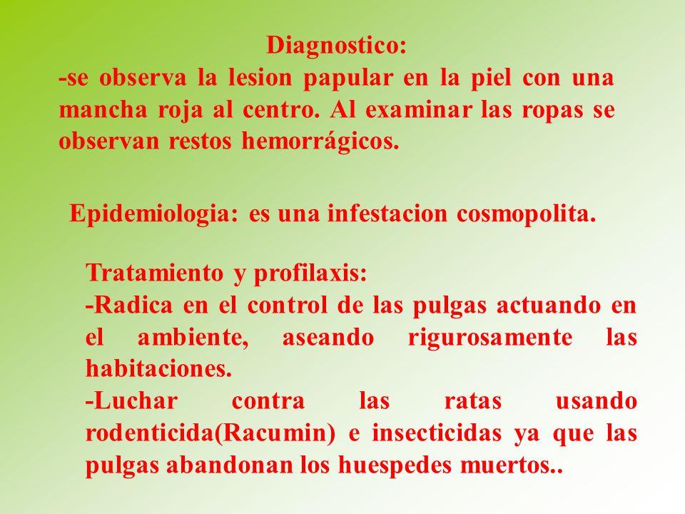 Diagnostico: -se observa la lesion papular en la piel con una mancha roja al centro. Al examinar las ropas se observan restos hemorrágicos.