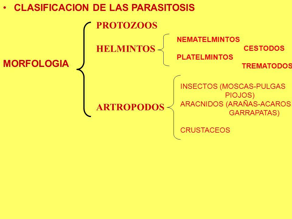 CLASIFICACION DE LAS PARASITOSIS