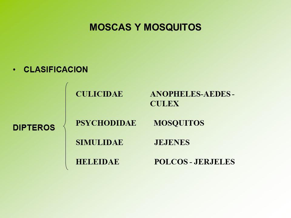 MOSCAS Y MOSQUITOS CLASIFICACION CULICIDAE ANOPHELES-AEDES - CULEX