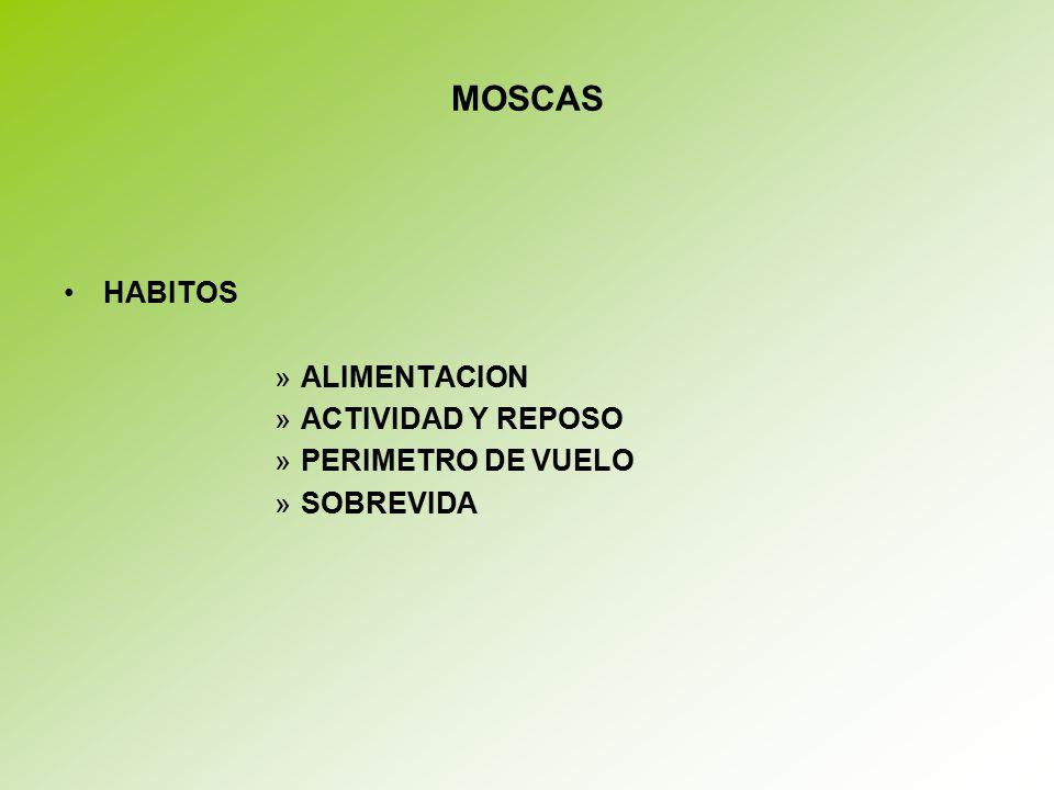MOSCAS HABITOS ALIMENTACION ACTIVIDAD Y REPOSO PERIMETRO DE VUELO