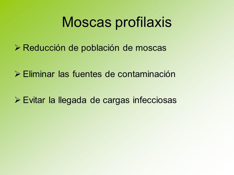 Moscas profilaxis Reducción de población de moscas