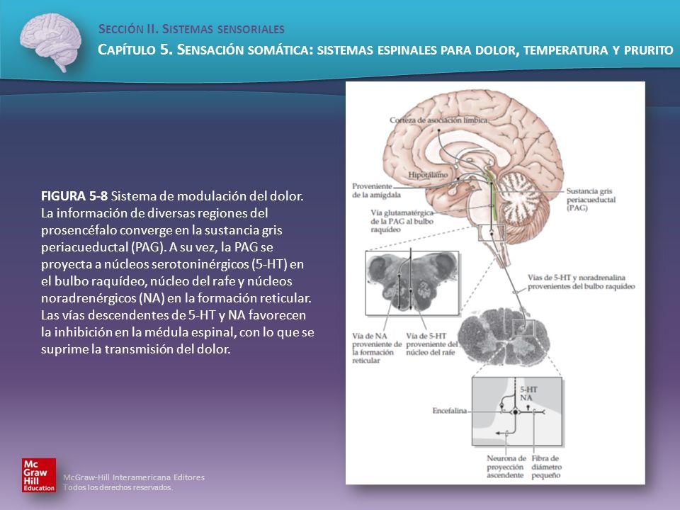 FIGURA 5-8 Sistema de modulación del dolor