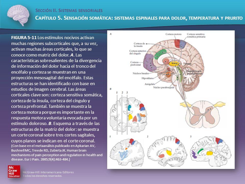 FIGURA 5-11 Los estímulos nocivos activan muchas regiones subcorticales que, a su vez, activan muchas áreas corticales, lo que se conoce como matriz del dolor.