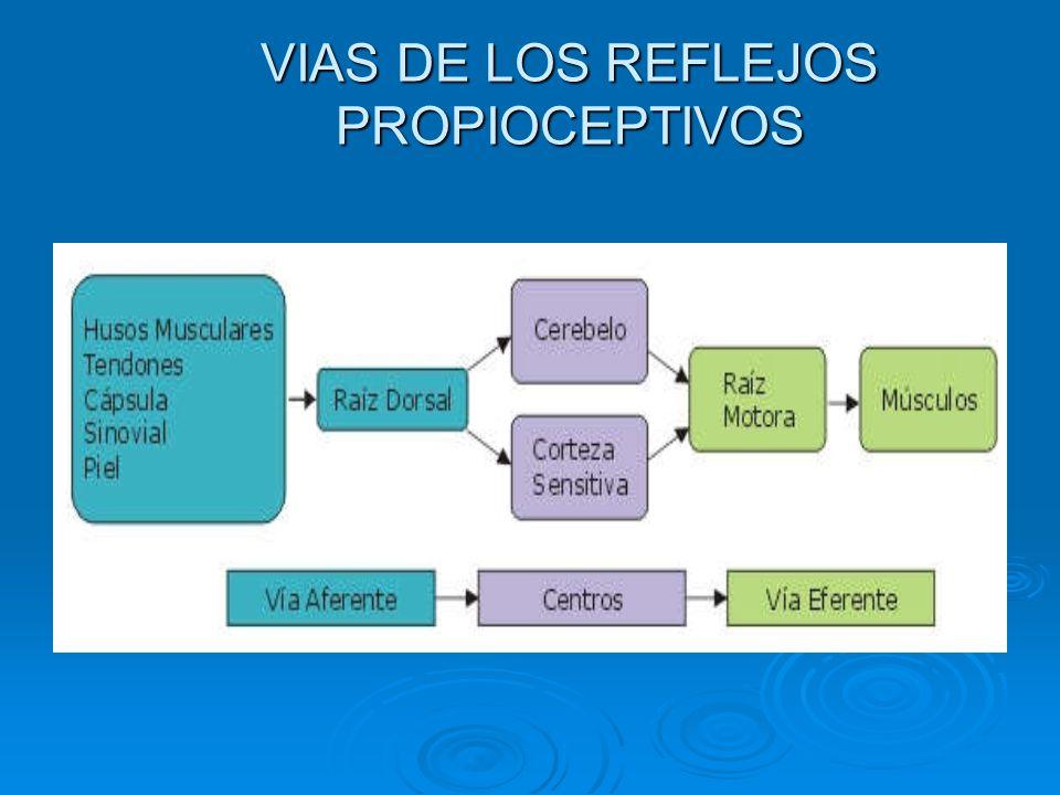 VIAS DE LOS REFLEJOS PROPIOCEPTIVOS