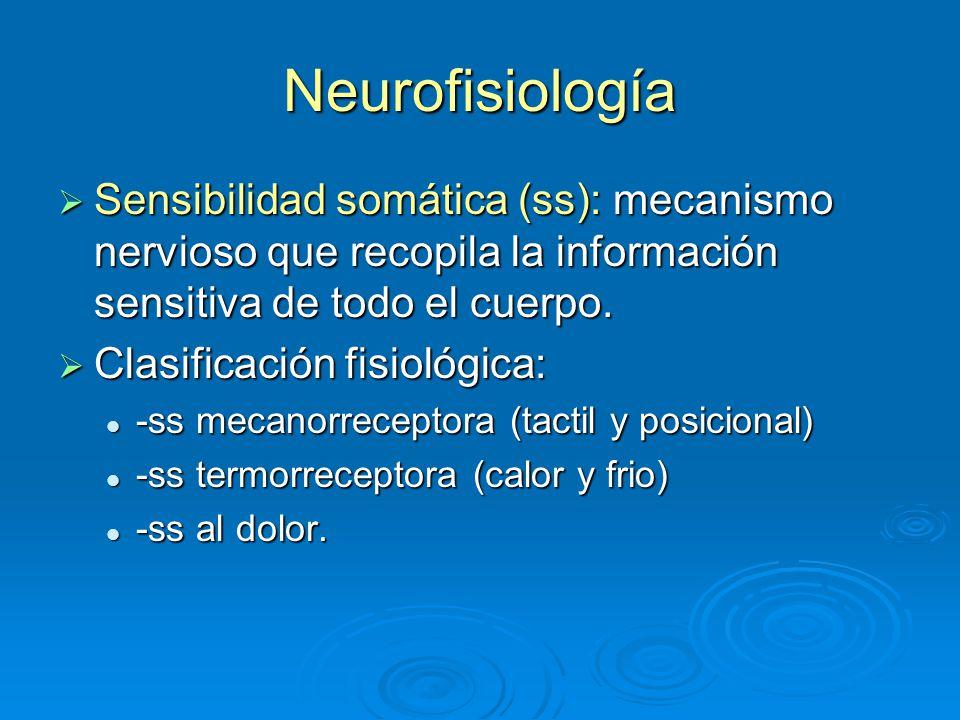 Neurofisiología Sensibilidad somática (ss): mecanismo nervioso que recopila la información sensitiva de todo el cuerpo.