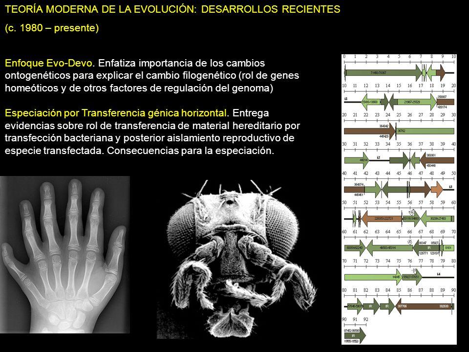 TEORÍA MODERNA DE LA EVOLUCIÓN: DESARROLLOS RECIENTES