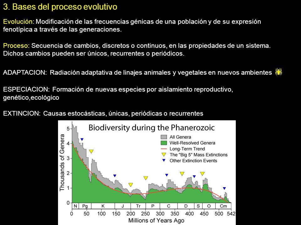 3. Bases del proceso evolutivo